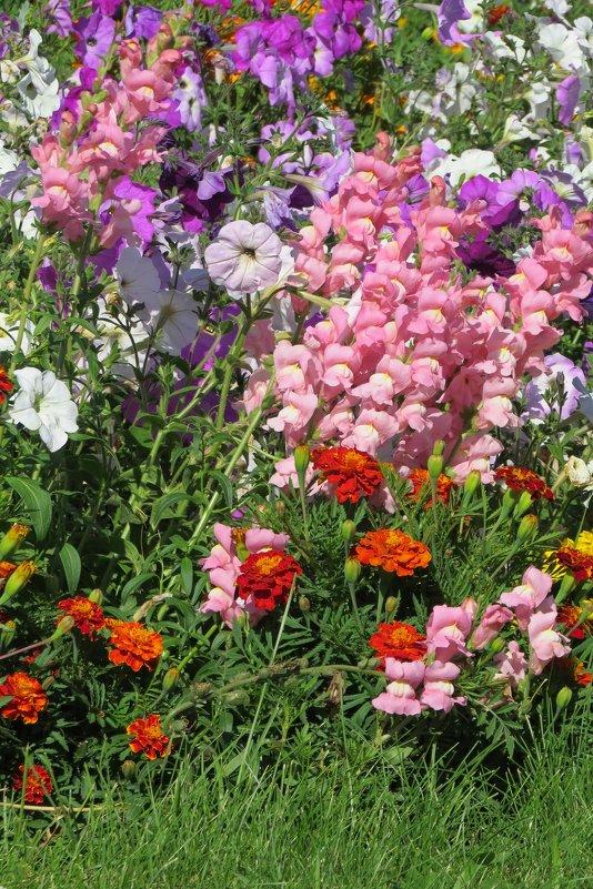 Лето разноцветное - Вера Щукина