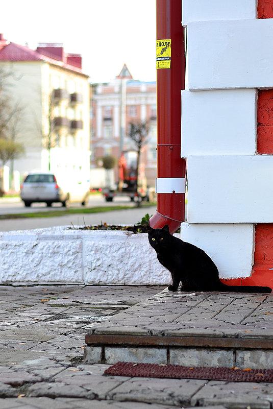 Черная кошка - Сергей Землянский