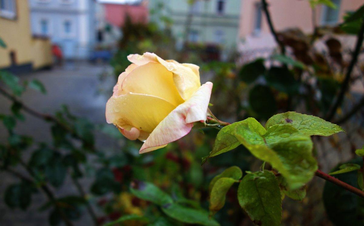 Грустят о лете поздние цветы... - Galina Dzubina
