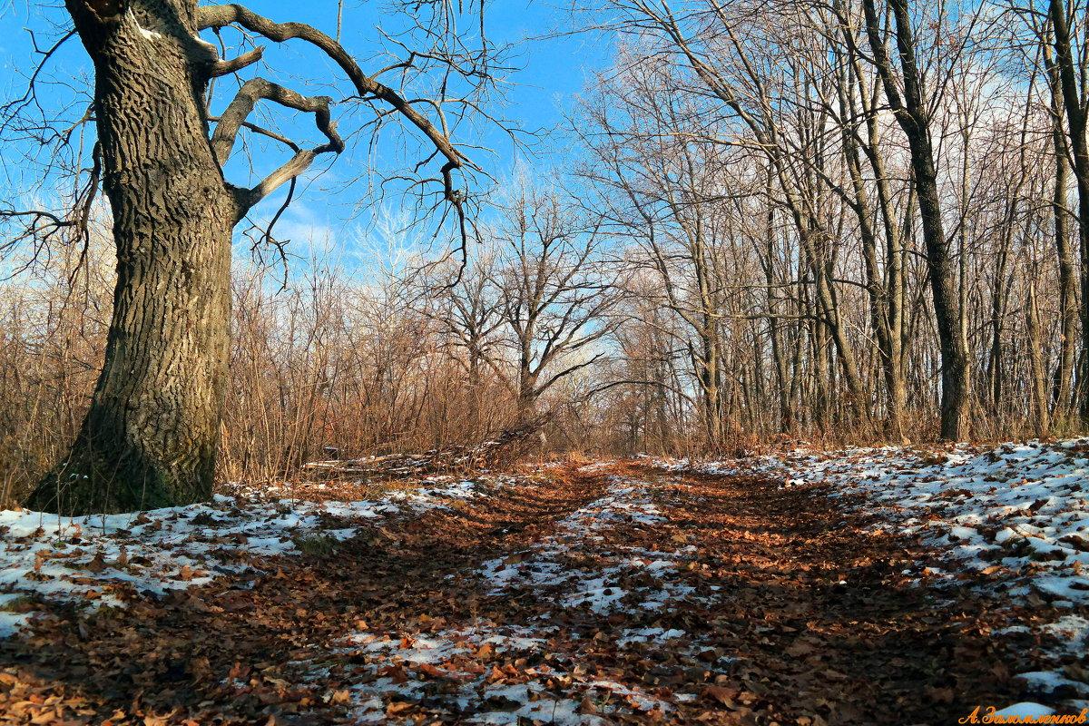 Зимы ждала, ждала природа... - Андрей Заломленков