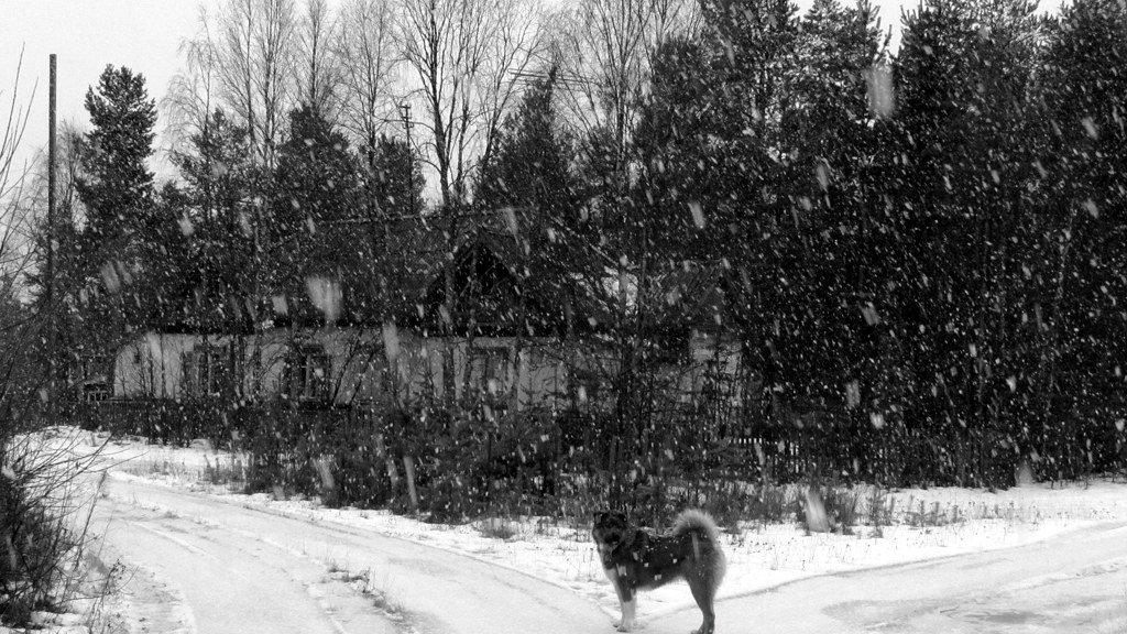 Снег идёт.. - Галина Полина