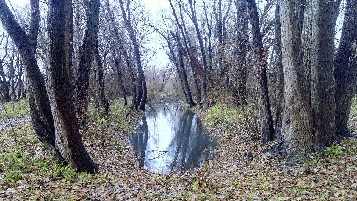 Лесное озеро - Александр Алексеев