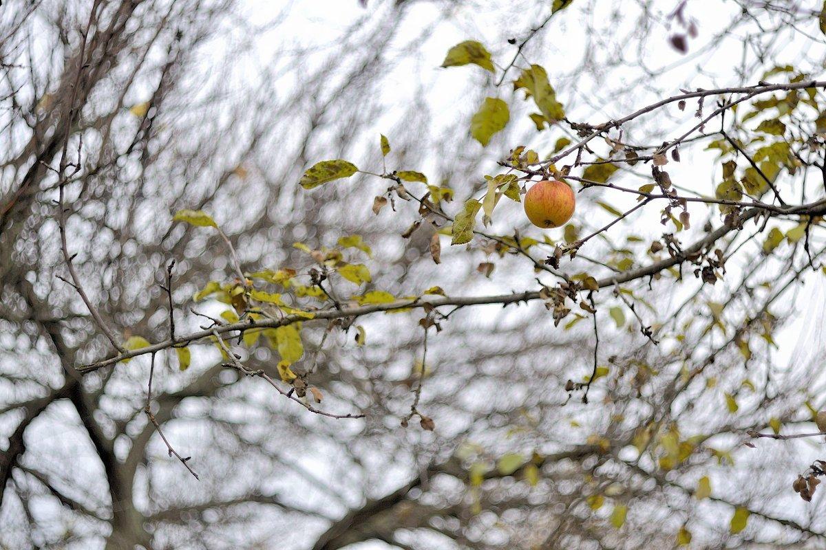 яблоко в ноябре - Бармалей ин юэй