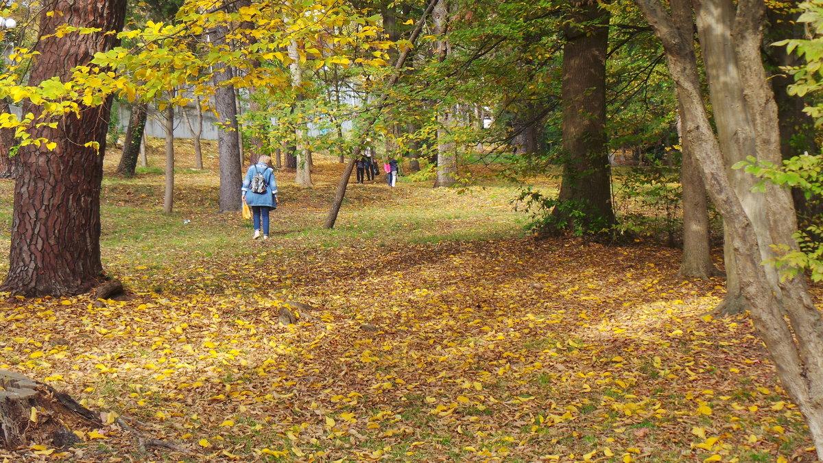 Осень а парке Ривьера. Сочи - Tata Wolf