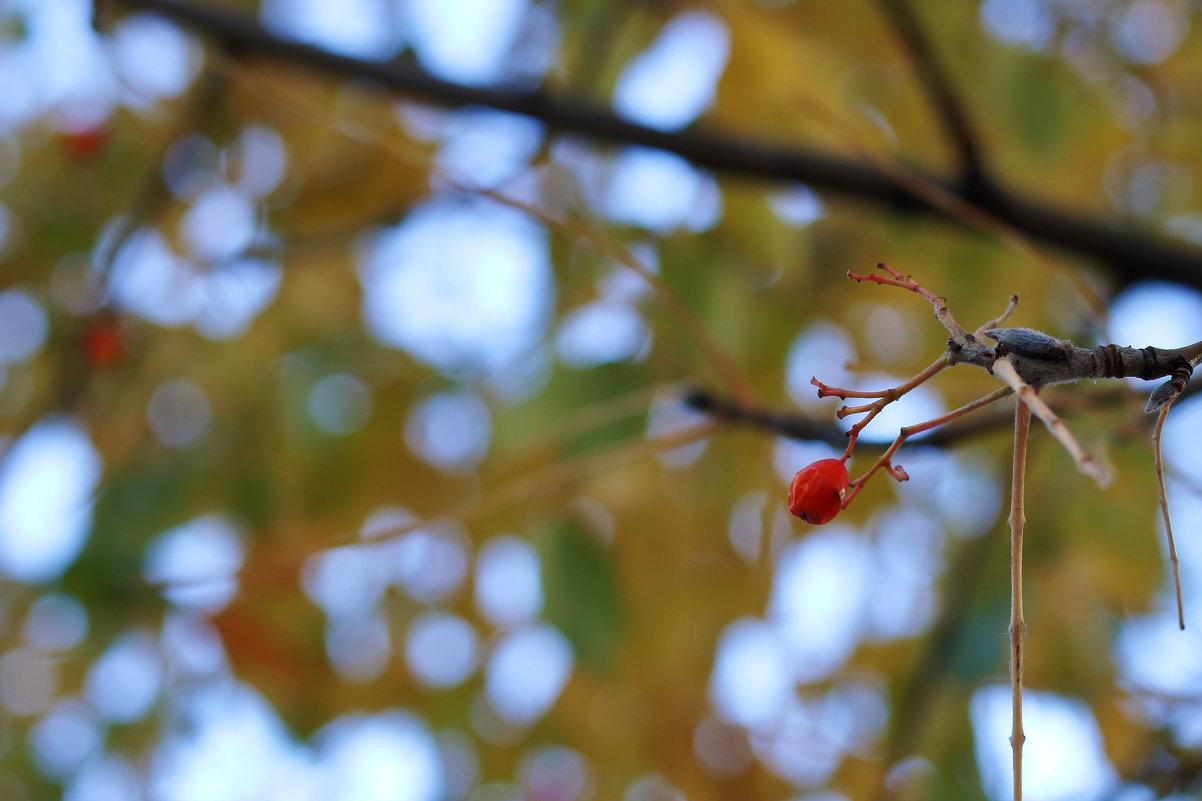 Ягодка - WhiteOwl