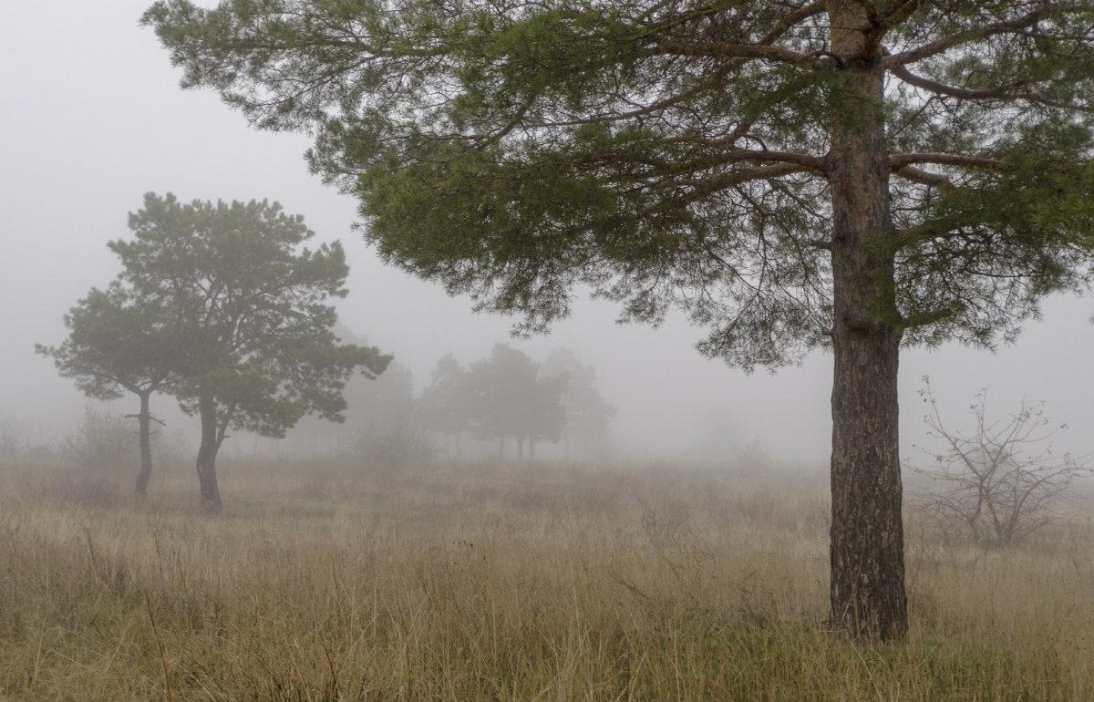 осень. туман. - Александр