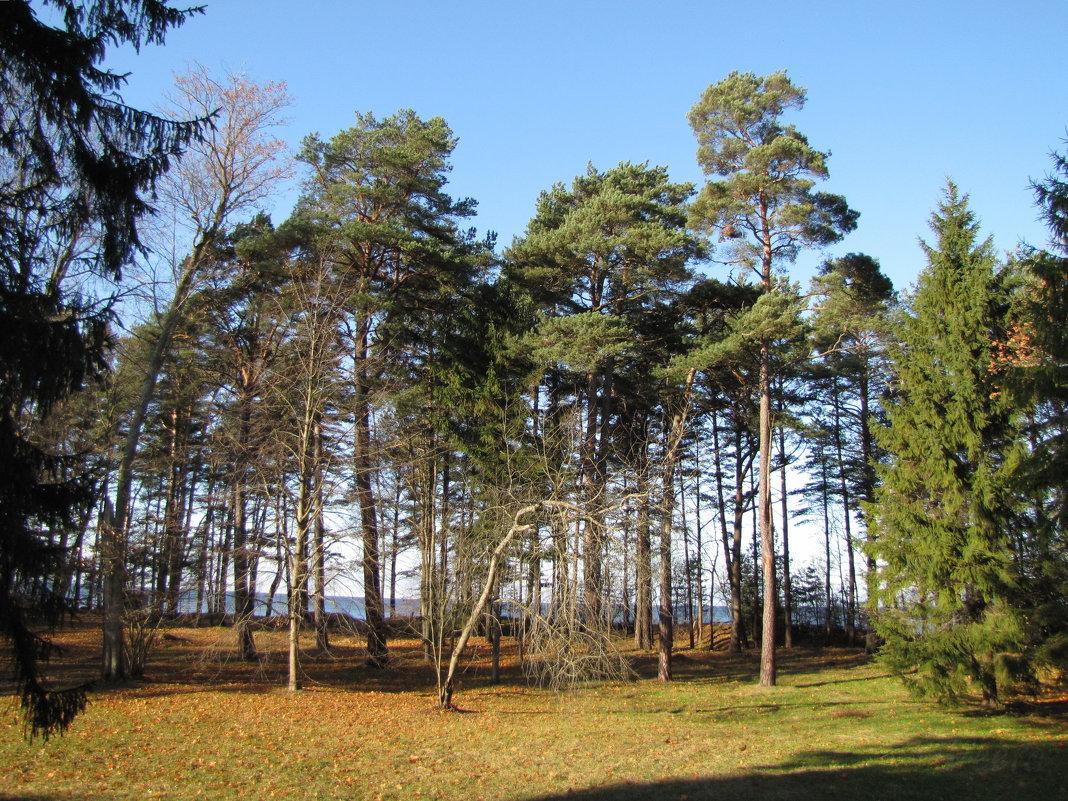 Нарва-Йыэсуу, Эстония - veera (veerra)
