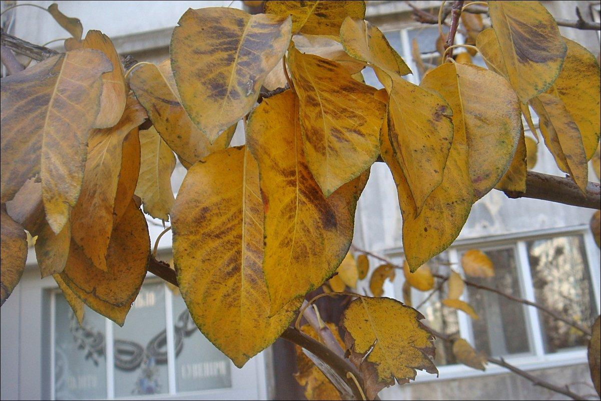Осенние листья - Нина Корешкова