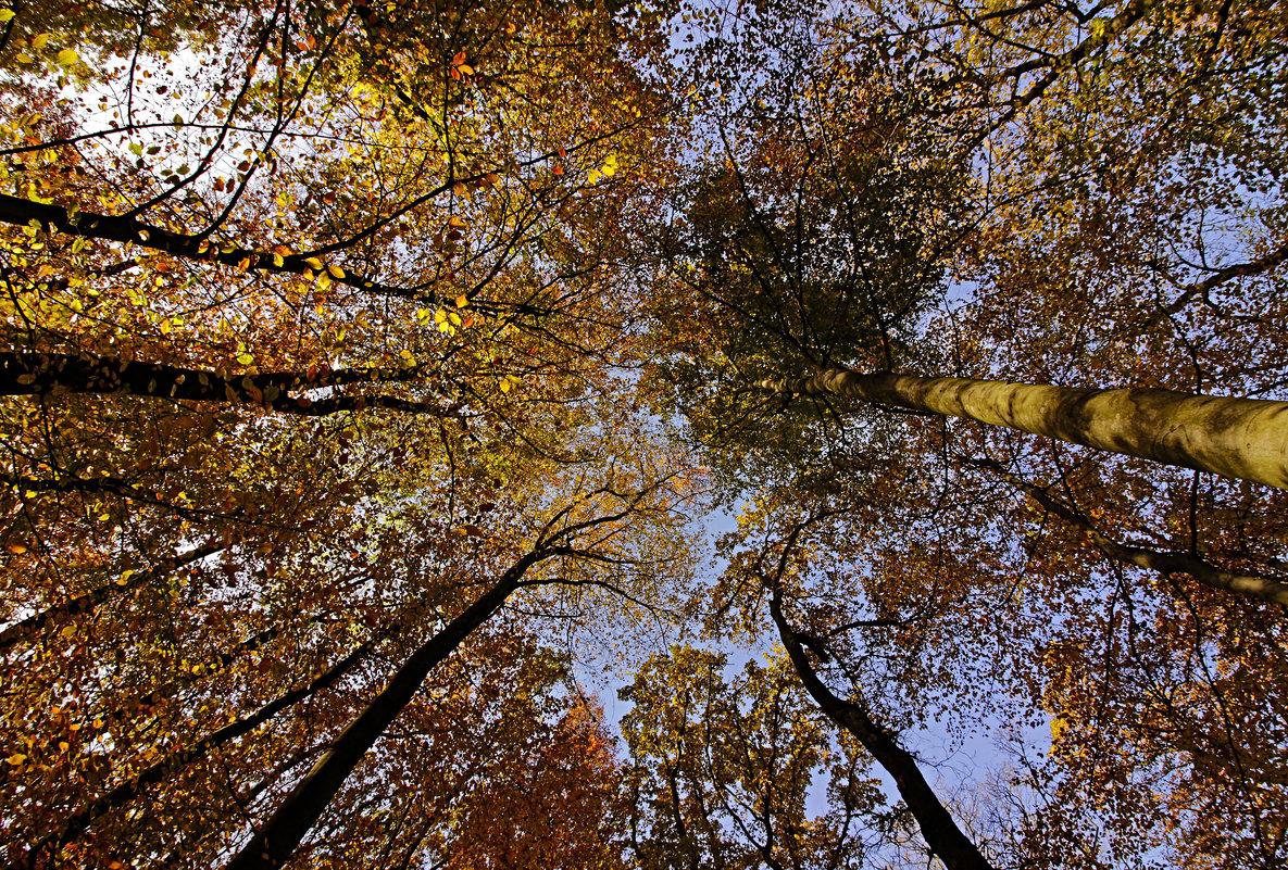 Осенний шатёр - Alexander Andronik
