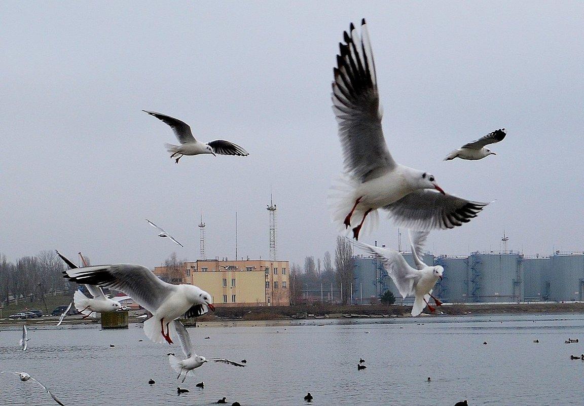 КОНТРОЛЬ ПРЕЖДЕ ВСЕГО - Анатолий Восточный