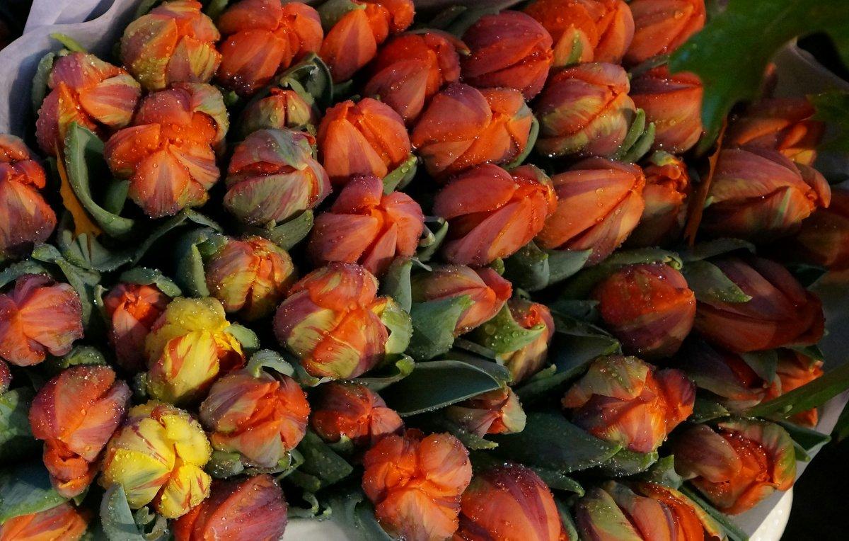 Тюльпаны под дождем - IURII