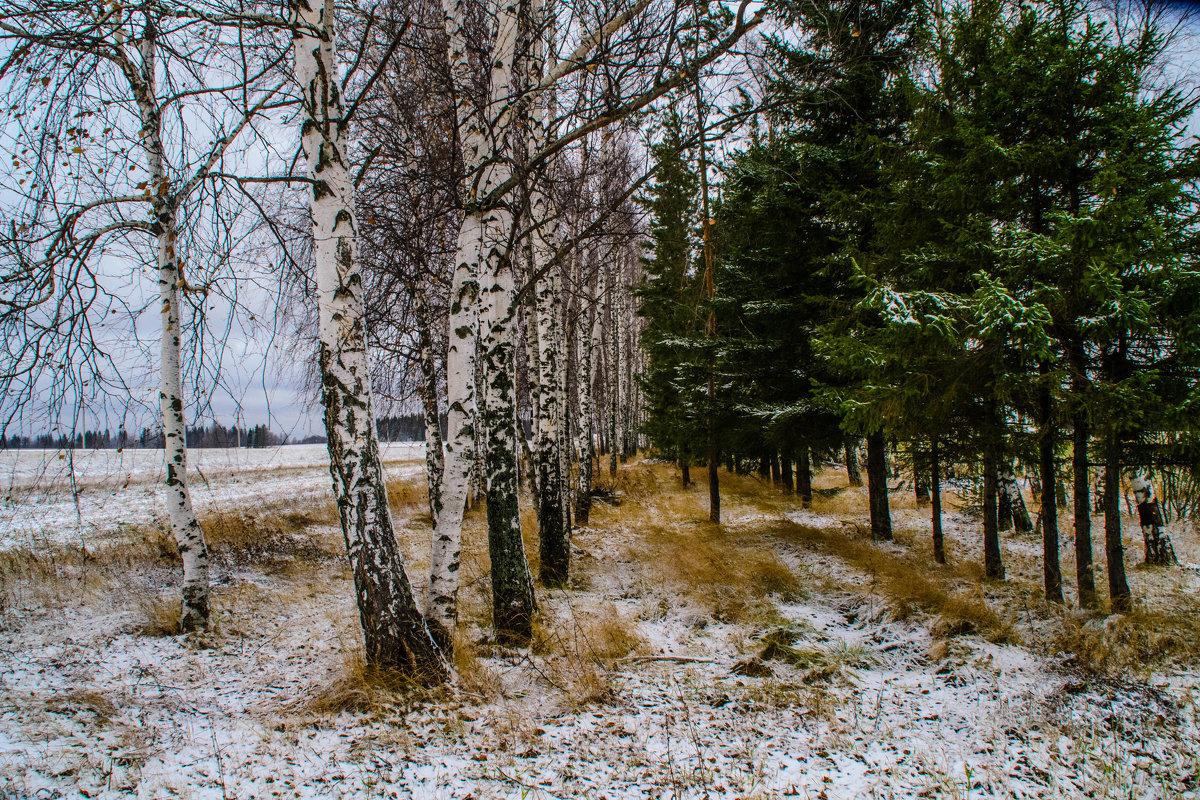 первый снег - petyxov петухов