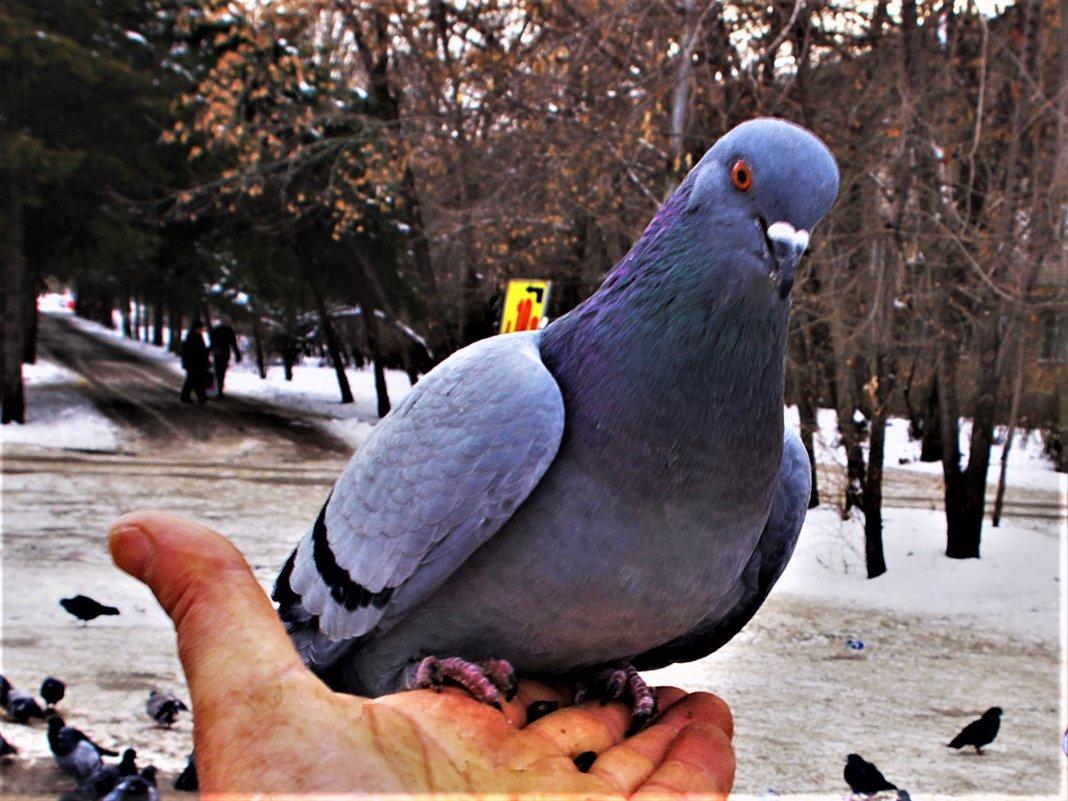 Красавчик или красавица - Сергей