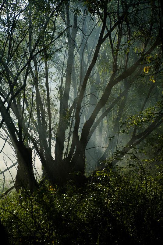Чудесная локация для фотосессий ))) - Галина Щербакова