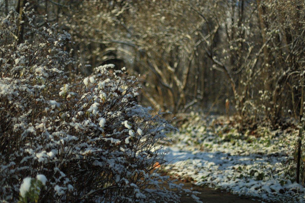 Первый снег - Darya Voronova