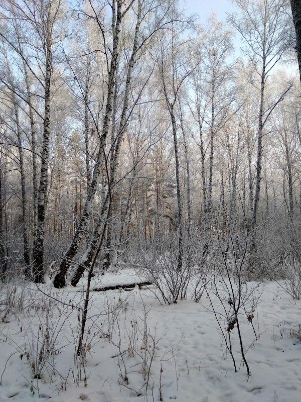 Мороз и солнце - день чудесный... ! - Татьяна Котельникова