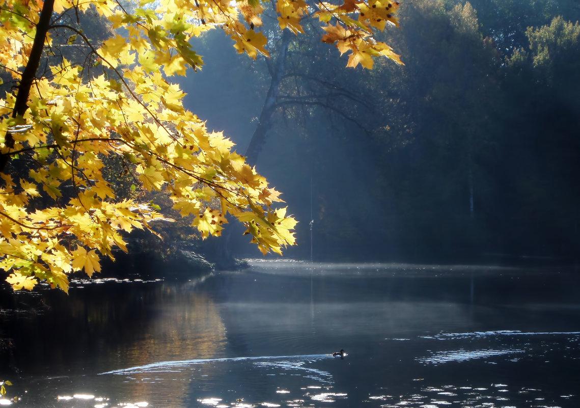 Осенний свет........... - Юрий Цыплятников
