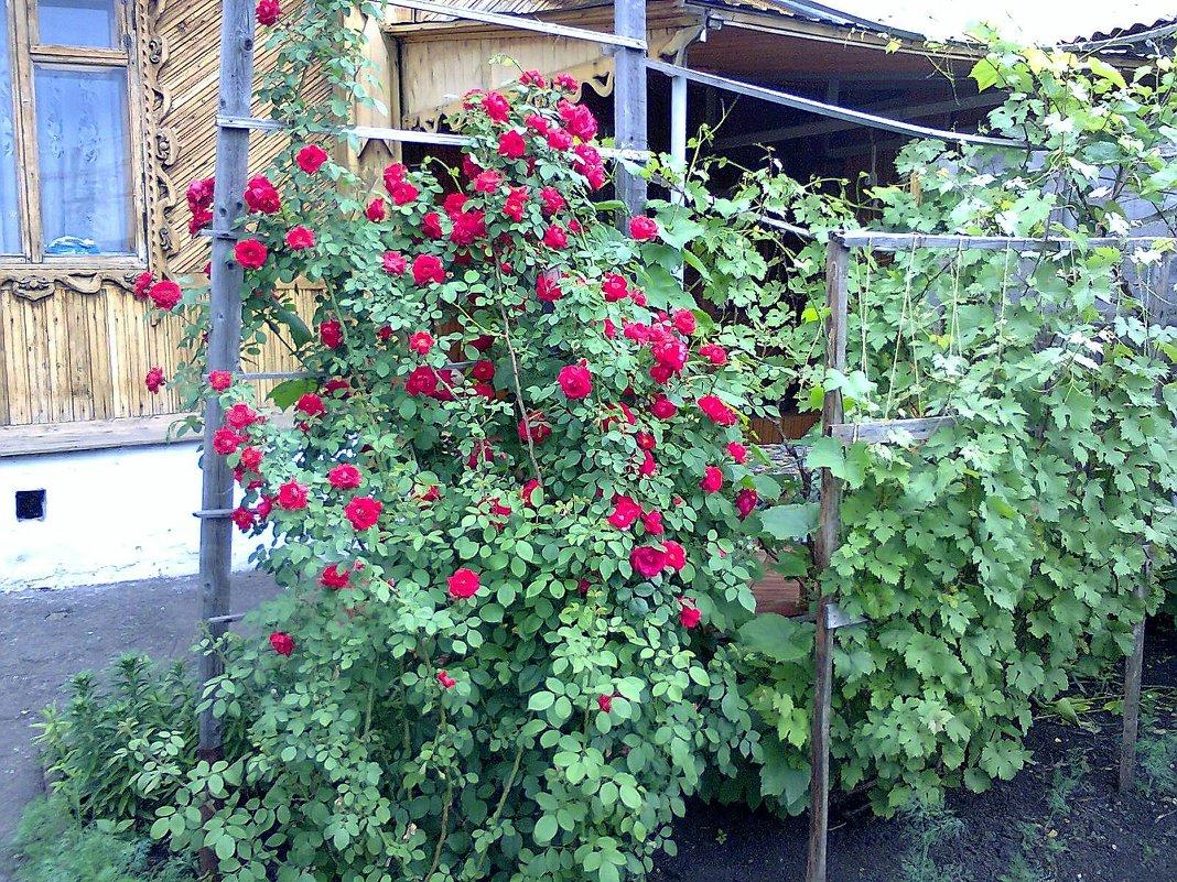 Во дворе. - венера чуйкова