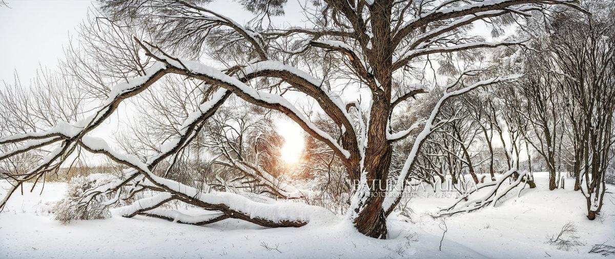 Раскидистое дерево - Юлия Батурина
