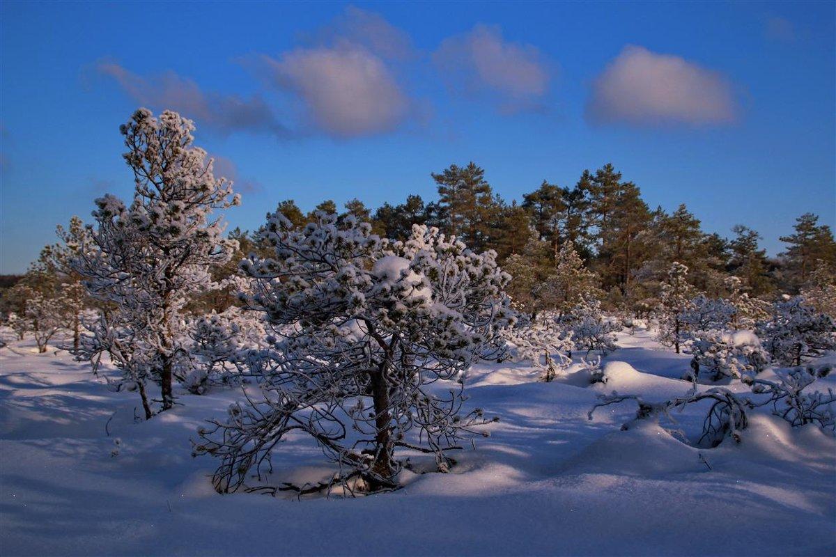 Лес уснул до будущей весны,утопая в снеговой постели - Татьянка *