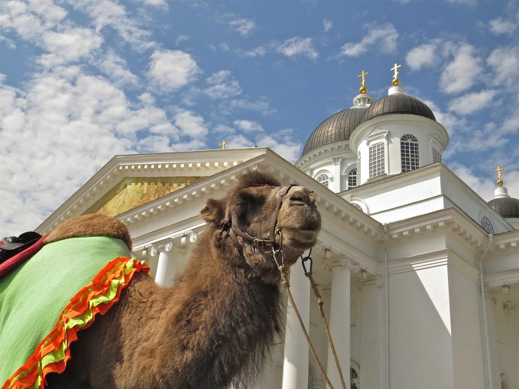 по улице верблюда водили - НАТАЛЬЯ