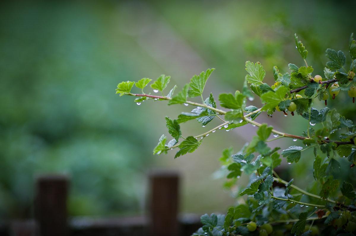 После дождя. - Борис Руненко