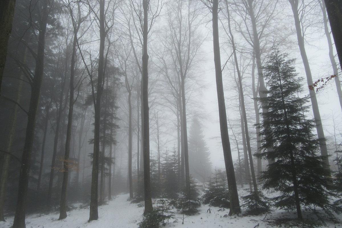 Туман в лесу... - Mariya laimite