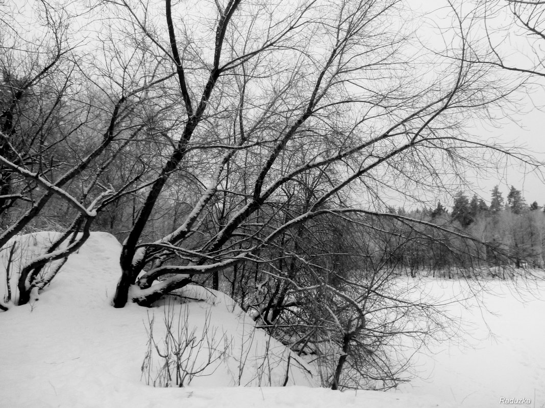 На берегу озера - Raduzka (Надежда Веркина)
