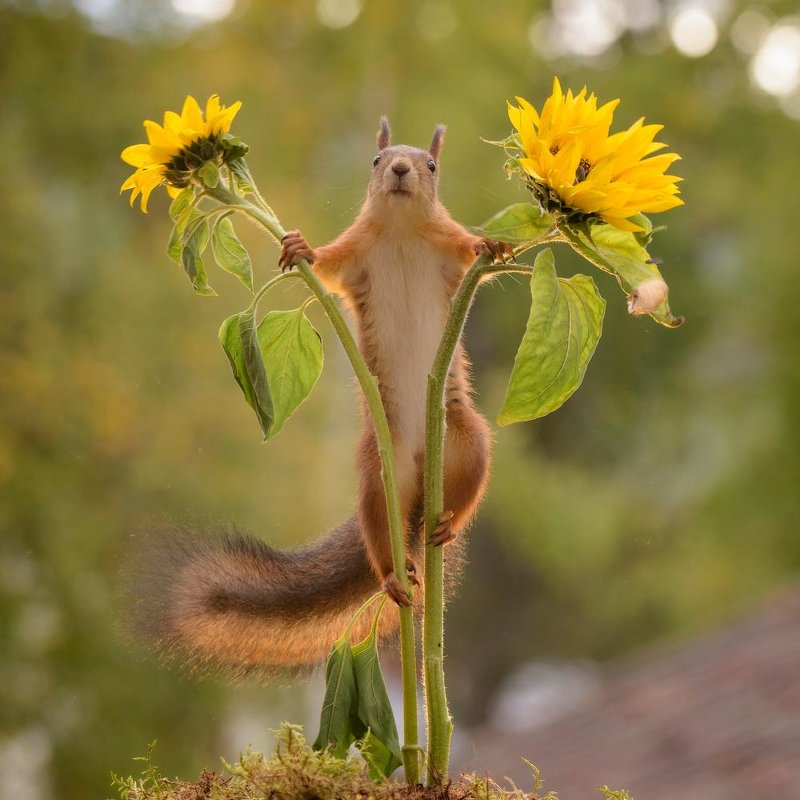 between sunflowers - ian 35AWARDS