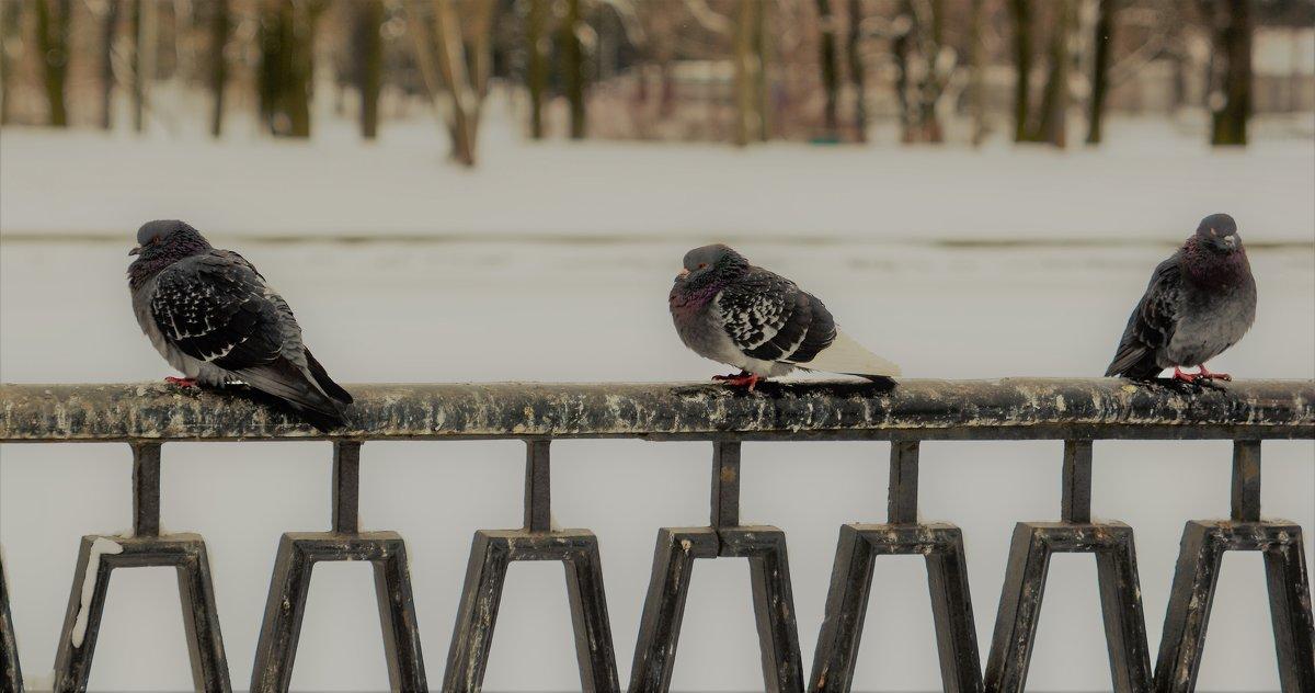 Ждем весну ..... - Сергей Клюев