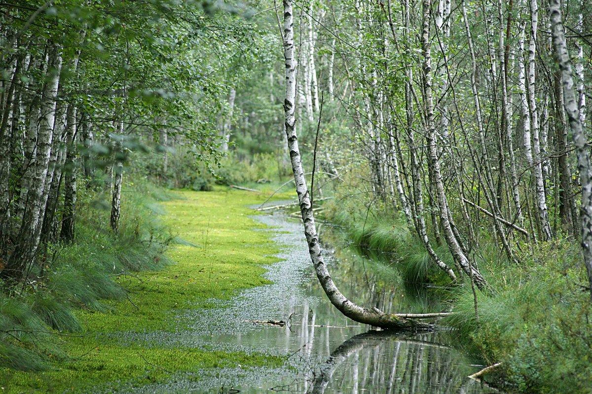 Весна на болоте. - adrow