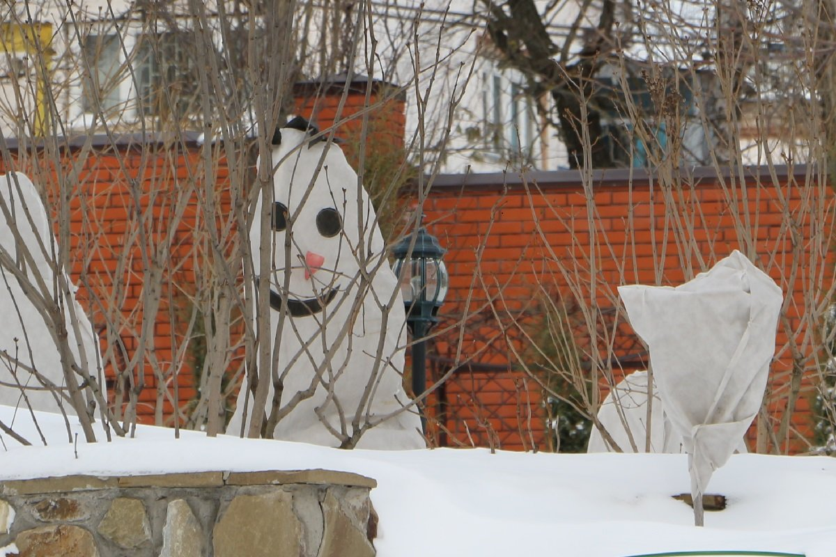 Зимний сад - Надежд@ Шавенкова