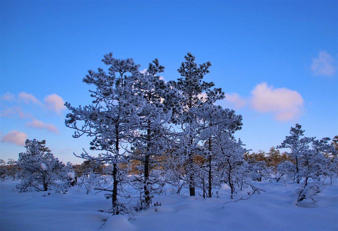 Ещё один зимний день.. - Татьянка *