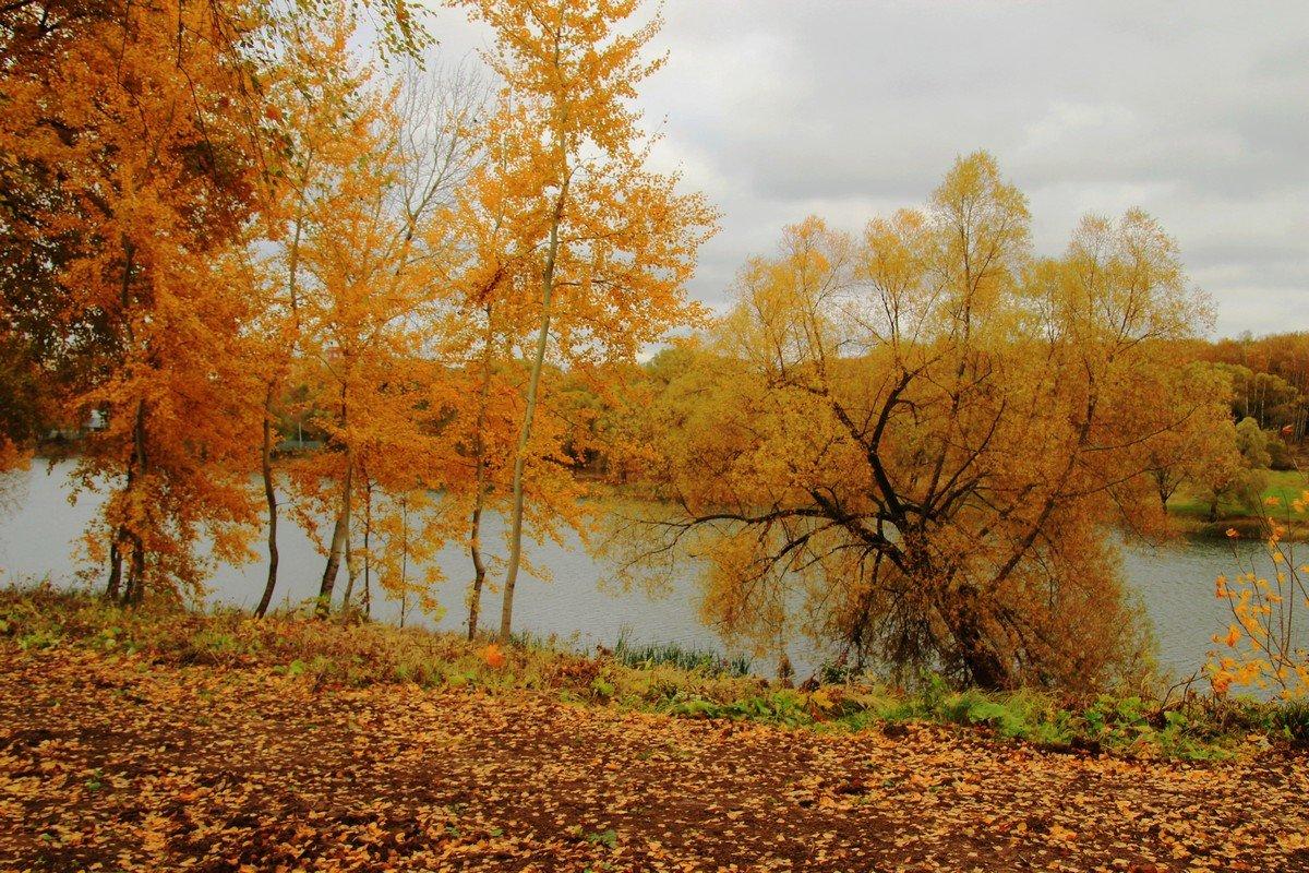 Рыжая осень. - Инна Щелокова