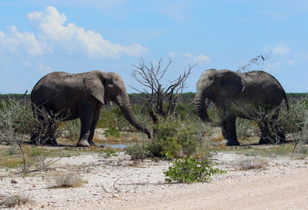 Животный Мир Африки. - Jakob Gardok