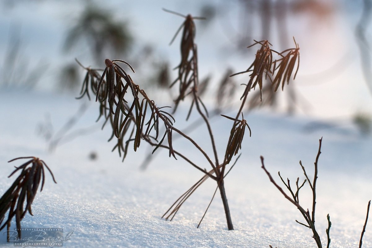 Зимний цвет - Влад Владов