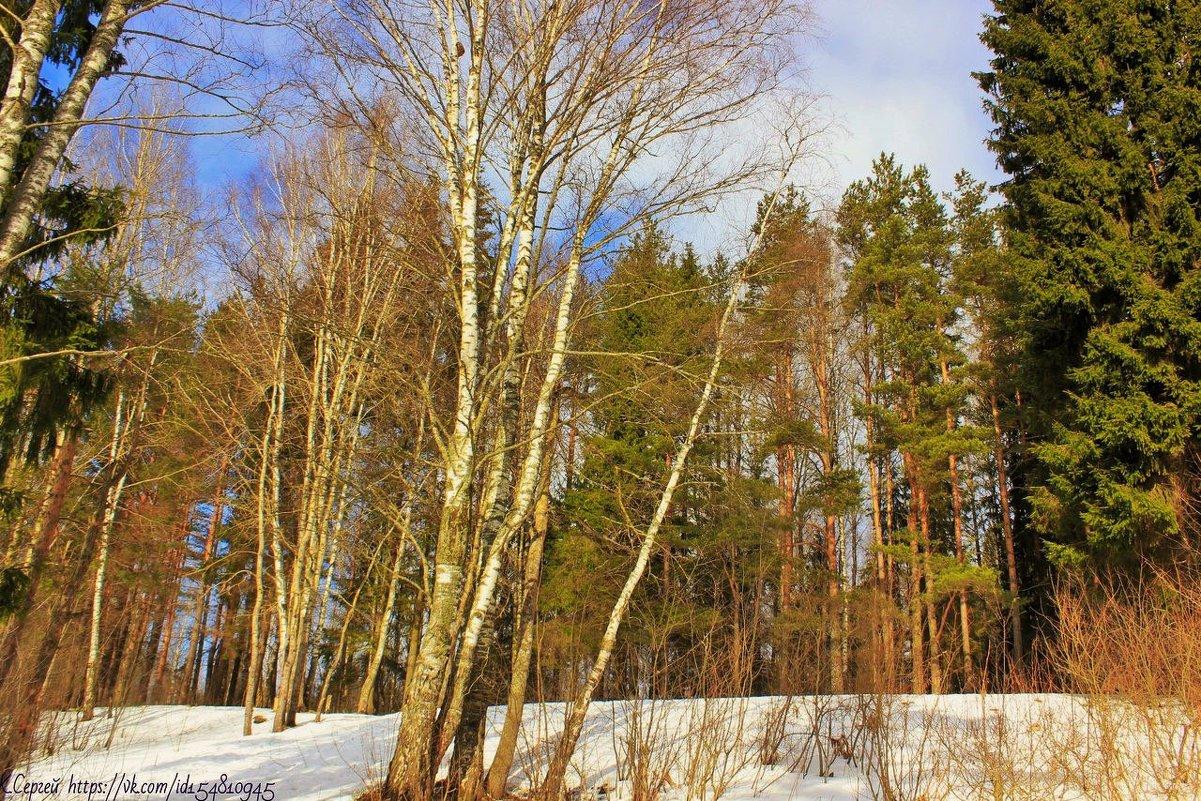 Весна в лесу - Сергей Кочнев