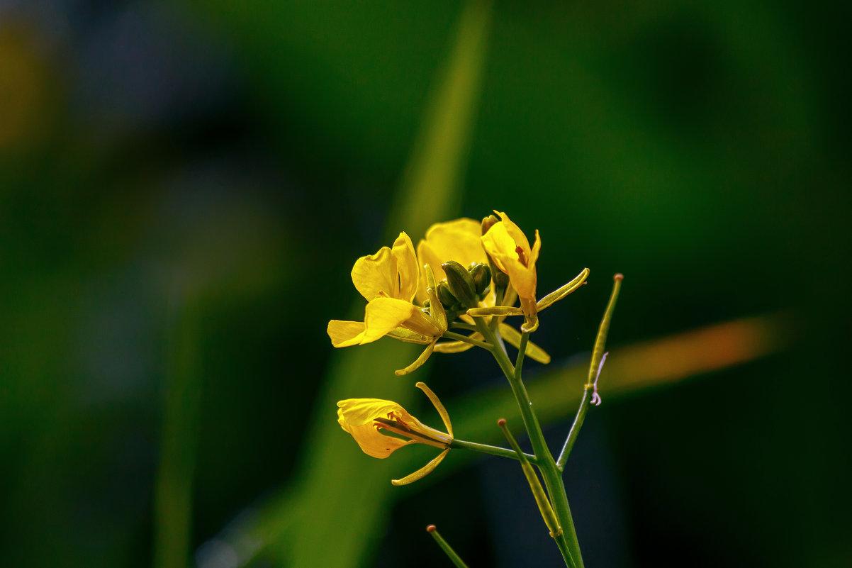 Цветок - олег