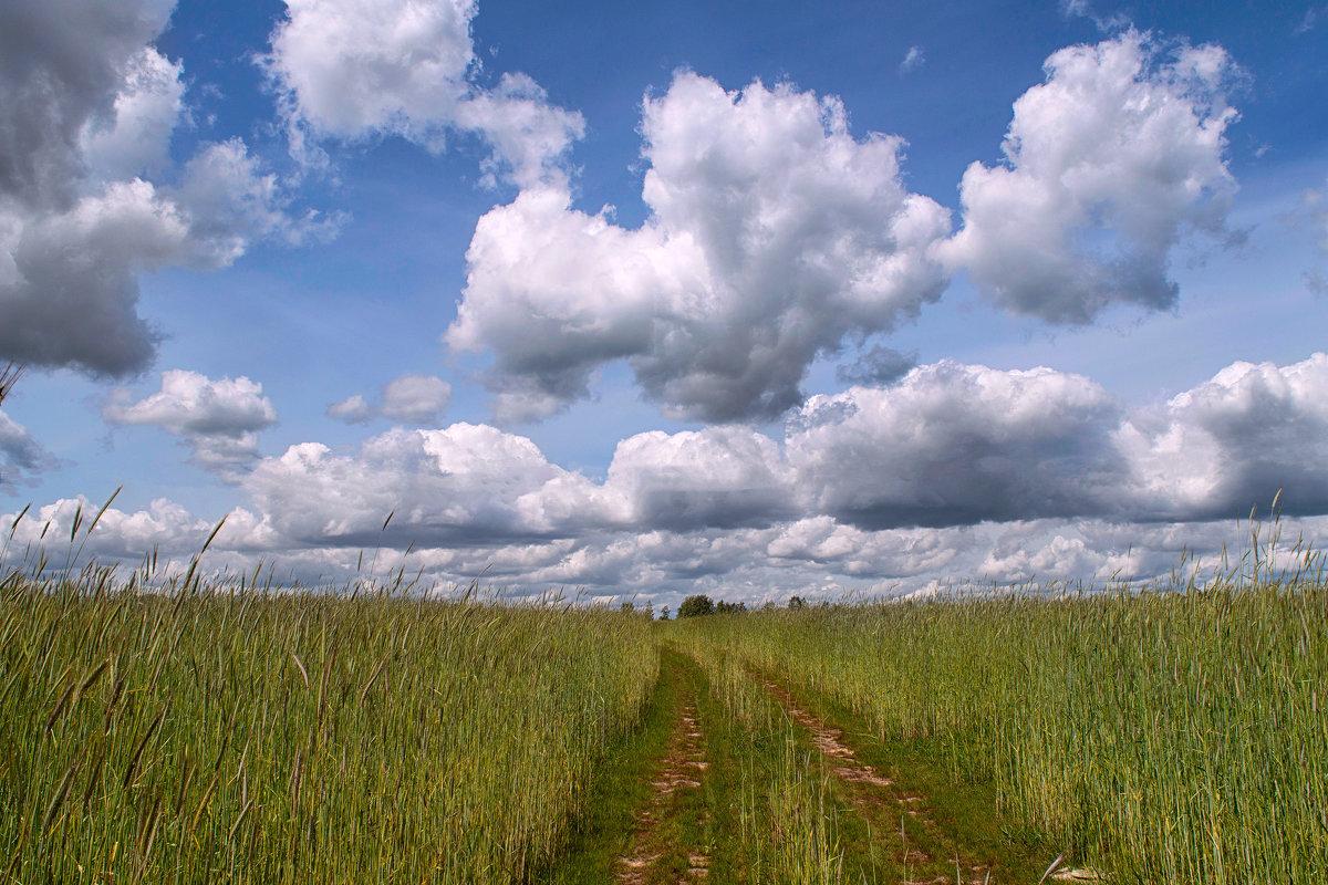 Дорога в облака. - Елена Струкова