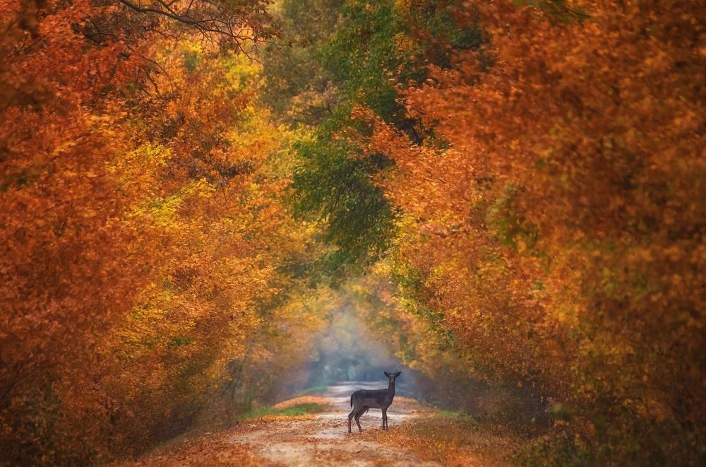 Autumn fantasy - ian 35AWARDS