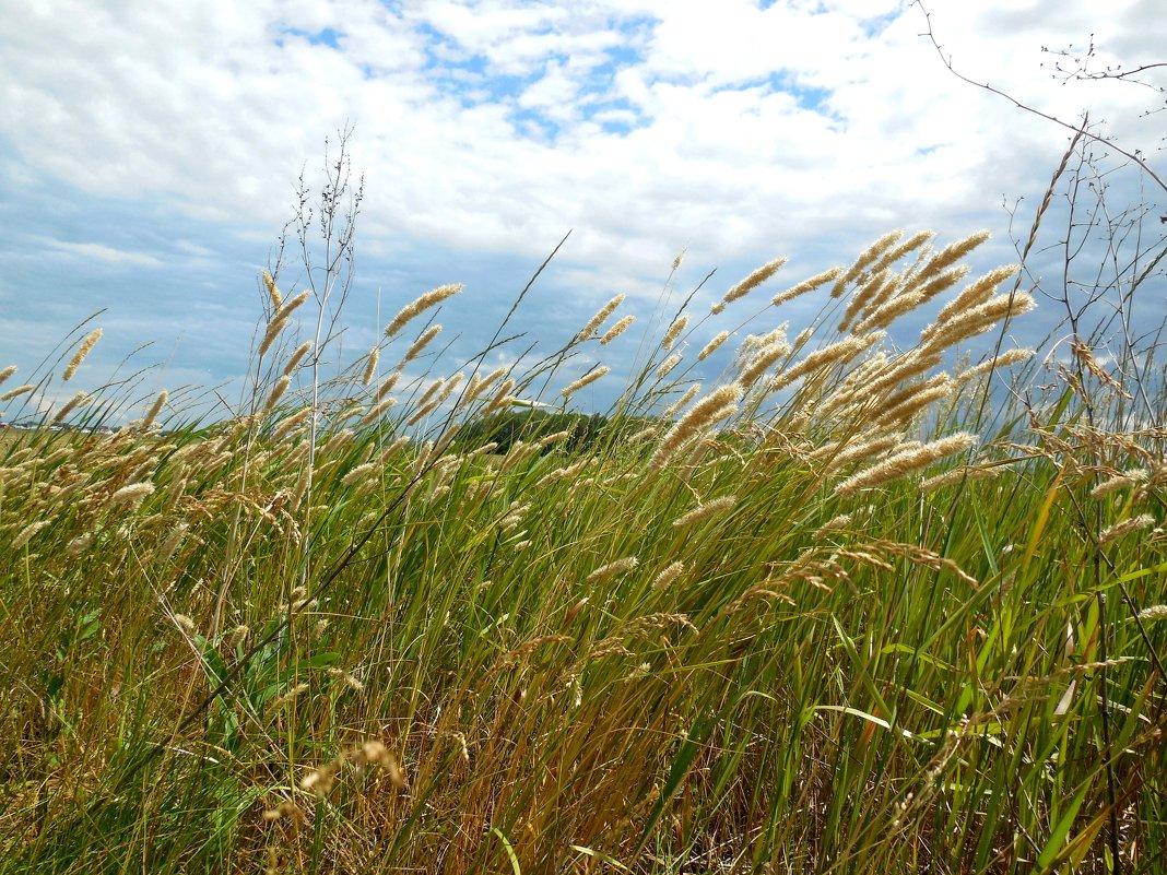 Травы луговые - Надежда