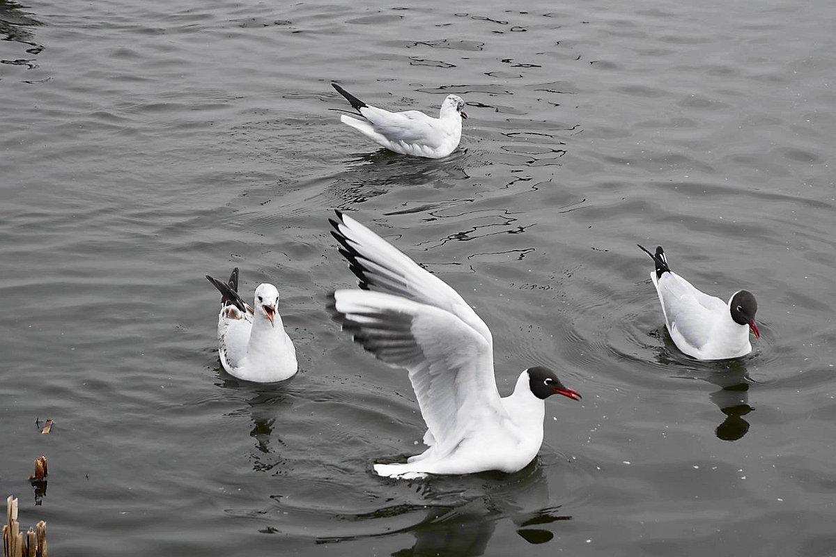 Весной чайки особенно крикливы - Маргарита Батырева