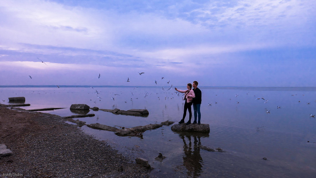 Море, чайки - Анатолий Шулков