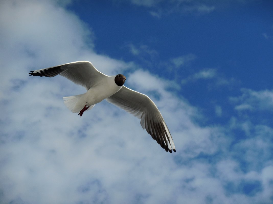 Чайка над водой - Надежда