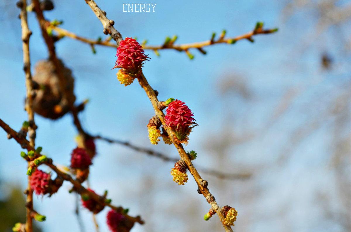 Весна - Марина Анищук