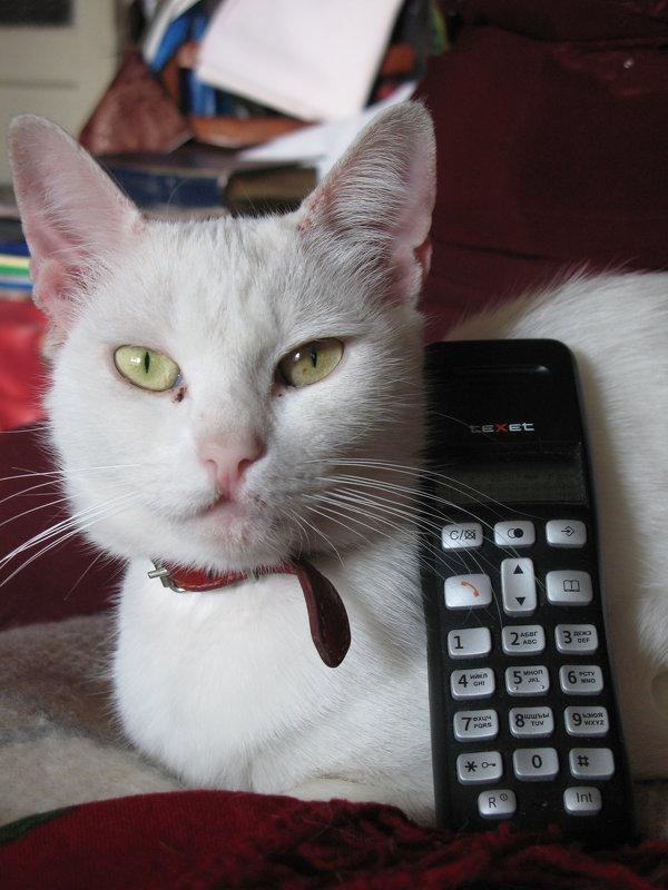 """""""Позвони мне, позвони! Март зовет меня из дома!.."""" (Песня кошки Маргошки) - Алекс Аро Аро"""