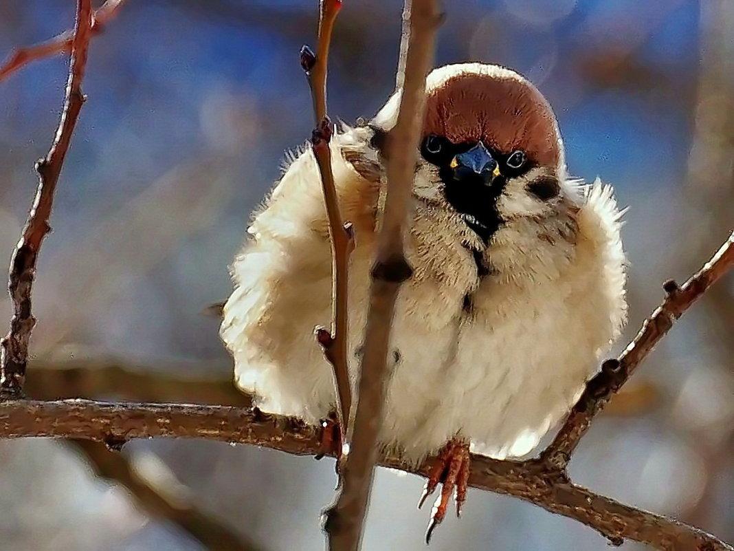 Кстати о птичках... - Александр Резуненко