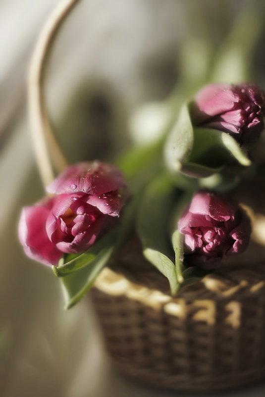 Цветы - Lusi Almaz