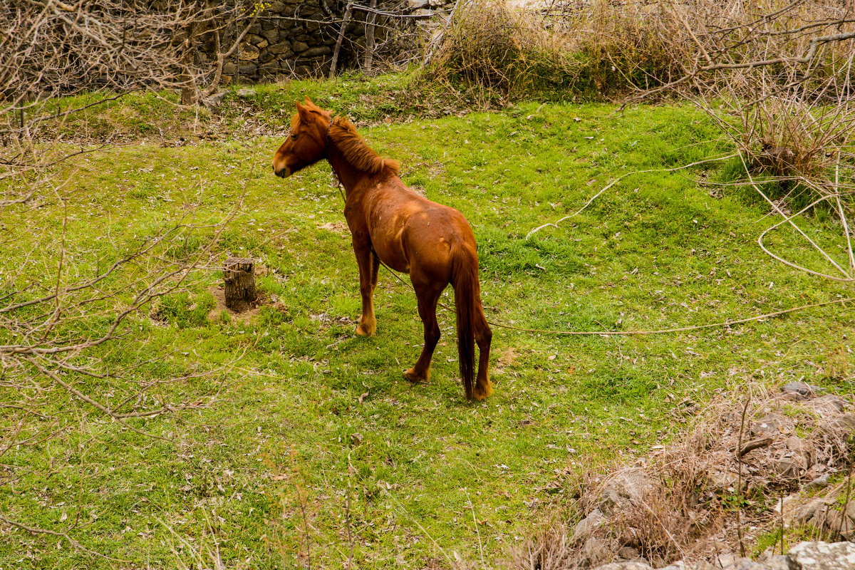 лошадь - David Jotyan