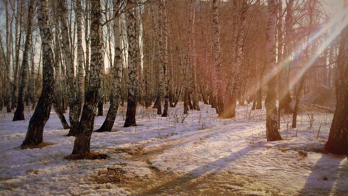 Весенние лучи  в конце марта . - Мила Бовкун